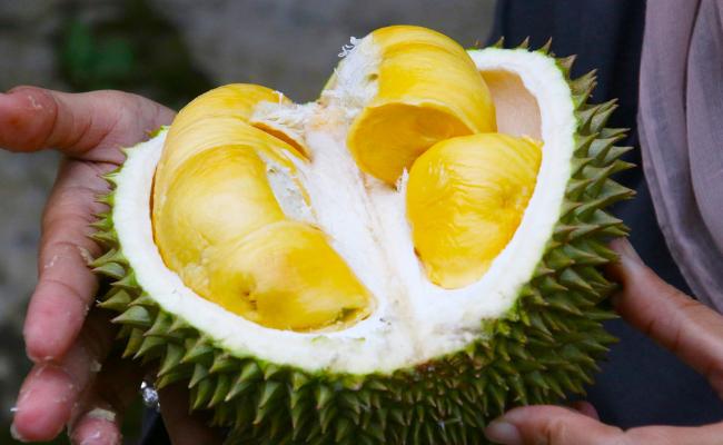 Tempat-Makan-Durian-Malaysia